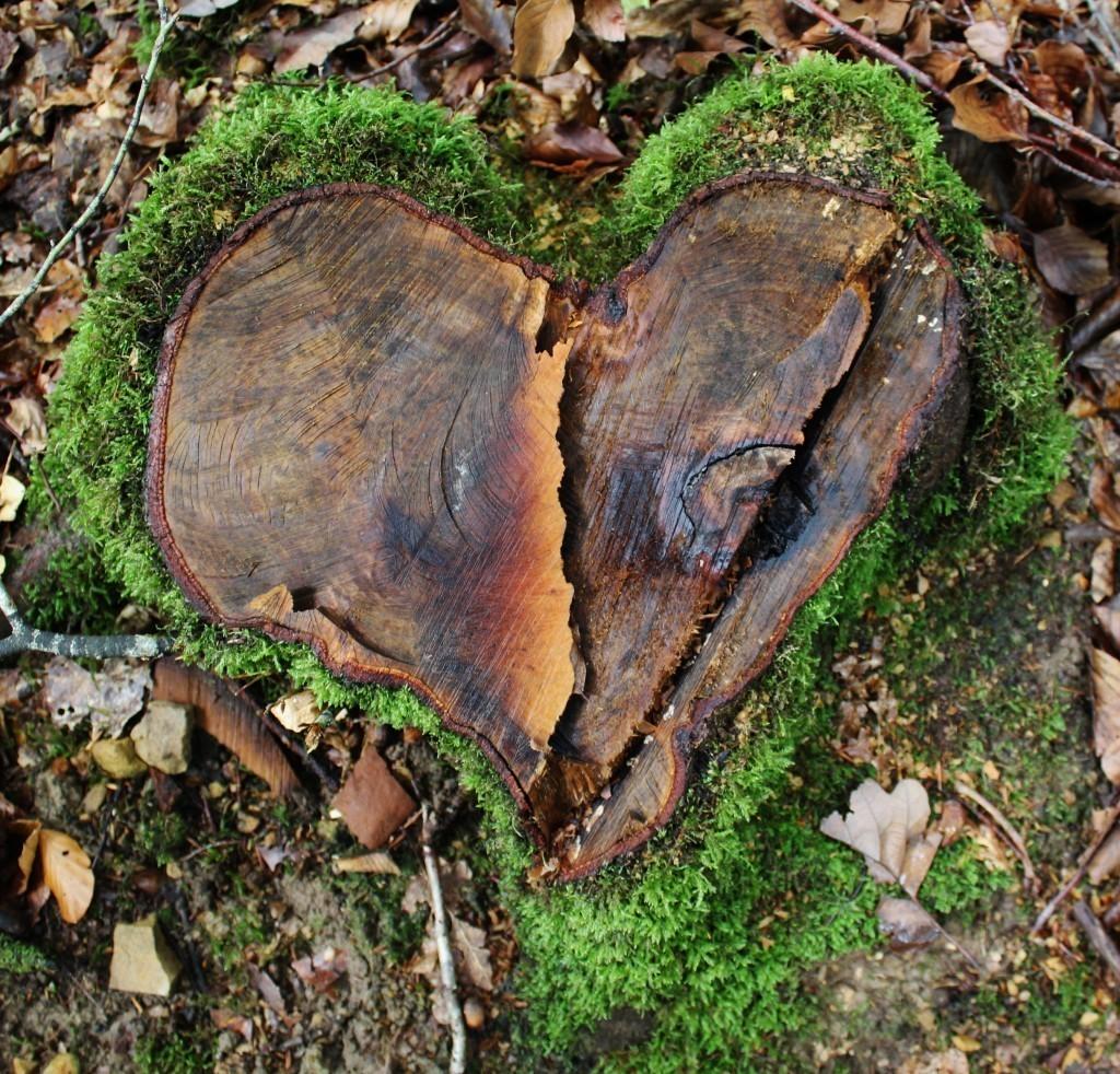 La nature nous offre des souvenirs incroyables !